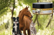 Pommade pour chien, cheval et chat
